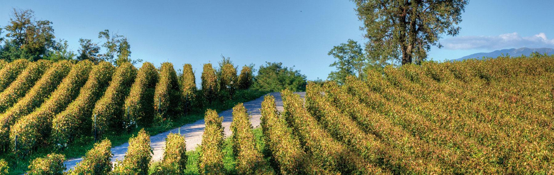 franciacorta hills